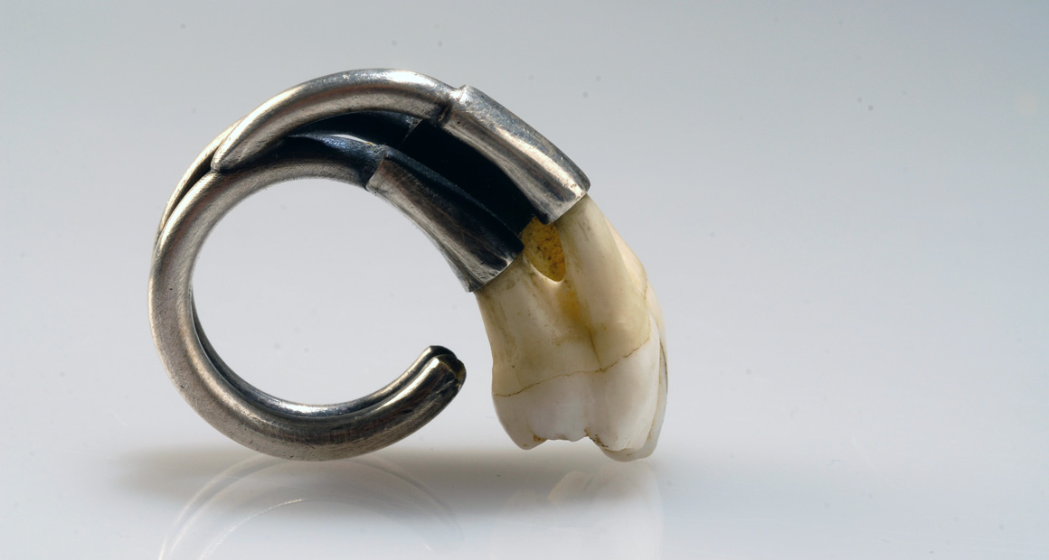 Roots silver ring with tooth